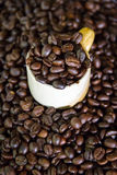 Roasted Coffee. Nice aroma of roasted coffee beans Royalty Free Stock Photography