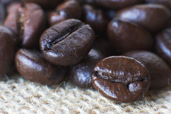 Roasted coffee seeds Royalty Free Stock Photography