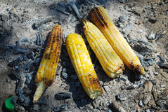 Roasted Corn Stock Photography