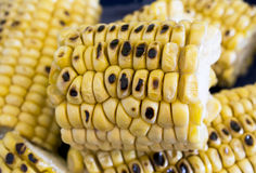 Roasted corn cobs Royalty Free Stock Photography
