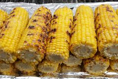 Roasted corn. Delicious drilled corn. Sweet yellow barbequed cobs. Grill and summer concept. Healthy eating. Roasted corn. Delicious drilled corn. Sweet yellow royalty free stock images