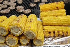 Roasted corn. Delicious drilled corn. Sweet yellow barbequed cobs. Grill and summer concept. Healthy eating. Roasted corn. Delicious drilled corn. Sweet yellow royalty free stock photos