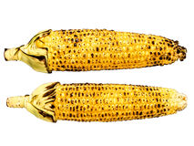 Roasted corncob isolated Royalty Free Stock Photo