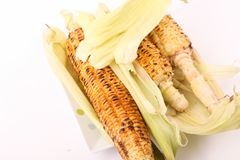 Roasted corns. Close view on Homemade golden roasted  corns on white background Stock Images