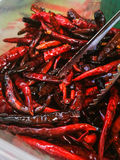 Roasted dried red chilies Stock Photography
