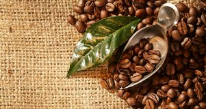 Roasted fresh coffee beans on a hessian background. With a vintage scoop and green leaf. Copy space on the burlap royalty free stock photos