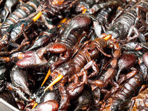 Roasted fried insects and scorpions and bugs as snack street foo Royalty Free Stock Photography