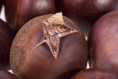 Roasted fruit of chestnut macro Royalty Free Stock Image