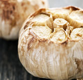 Roasted garlic bulbs Royalty Free Stock Photography