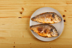 Roasted gilt head bream Stock Photography