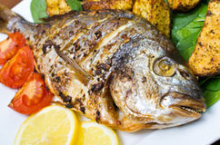 Roasted gilthead fish Royalty Free Stock Images