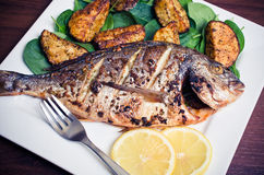 Roasted gilthead fish Stock Images