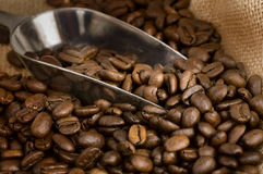 Roasted golden brown coffee beans Stock Photos