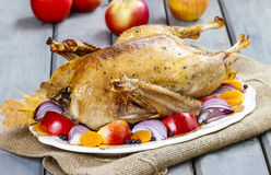Roasted goose with apples and vegetables Royalty Free Stock Photo
