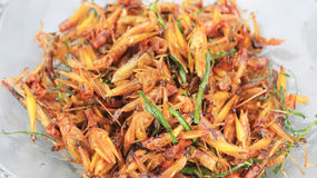 Roasted grasshoppers Stock Photo