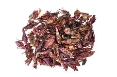 Roasted grasshoppers Stock Images