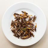 Roasted grasshoppers on a white plate. Crispy asian snack, fried grasshoppers served on a white plate Royalty Free Stock Photos