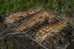 Roasted on grill fresh fish. Carp baked on BBQ.  stock images