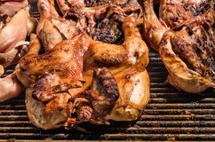 Roasted grilled Chicken Royalty Free Stock Photography