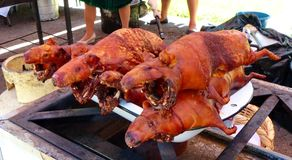 Roasted guinea pig or cuy, South America traditional food. Traditional delicious food of South America - roasted guinea pig or cuy cooked at open fire and ready royalty free stock image