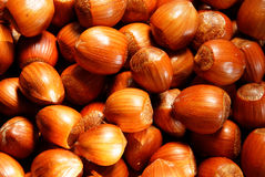 Free Roasted Hazelnut Stock Photos - 12992903