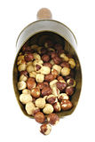 Roasted hazelnuts. In a brass scoop isolated on white background Royalty Free Stock Images