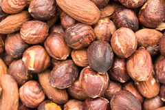 Roasted Hazelnuts Stock Photo