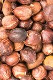 Roasted Hazelnuts Royalty Free Stock Image
