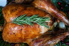 Roasted holiday turkey garnished with fresh herbs stock photo