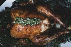 Roasted holiday turkey garnished with fresh herbs stock photography