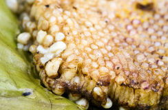 Roasted immature beehive on banana leaves Stock Images