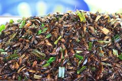 Roasted insects, grasshopper, Royalty Free Stock Image