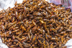 Roasted insects local street food Yangon Myanmar Stock Photography