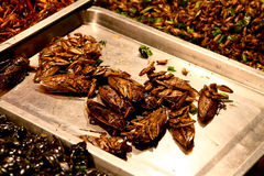 Roasted insects served at Bangkok market Stock Images