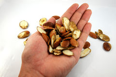 Roasted Kayu Seeds in hand Royalty Free Stock Photography