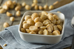 Roasted Macadamia Nuts with Sea Salt Stock Image