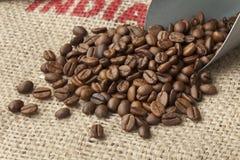 Roasted  Malabar coffee beans Stock Photo