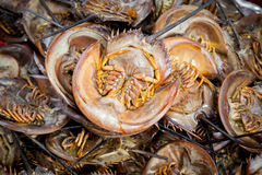Roasted Mangrove horseshoe crab Stock Image