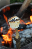 Roasted Mashmallow on a Camp Fire Royalty Free Stock Photos