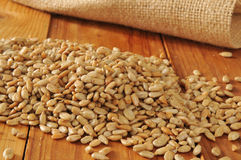 Roasted organic sunflower seeds Royalty Free Stock Image