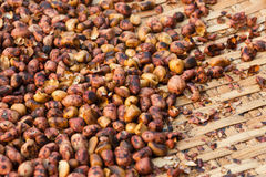 Roasted peanuts Stock Photography