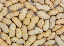 Roasted peanuts in shell Stock Images