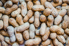 Roasted peanuts on white wooden background Stock Image