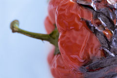 Roasted pepper Royalty Free Stock Photos