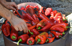 Roasted peppers Stock Photos