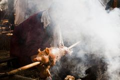 Roasted pig on the rack, piglet stock images