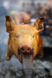 Roasted pig on a spit Royalty Free Stock Photo