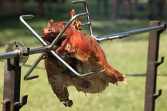Roasted Pig Royalty Free Stock Image