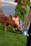 Roasted piglet. Royalty Free Stock Images