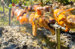 Roasted pigs on skewers royalty free stock photos
